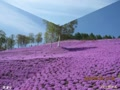 動画ヨンジュンssiと北海道の美